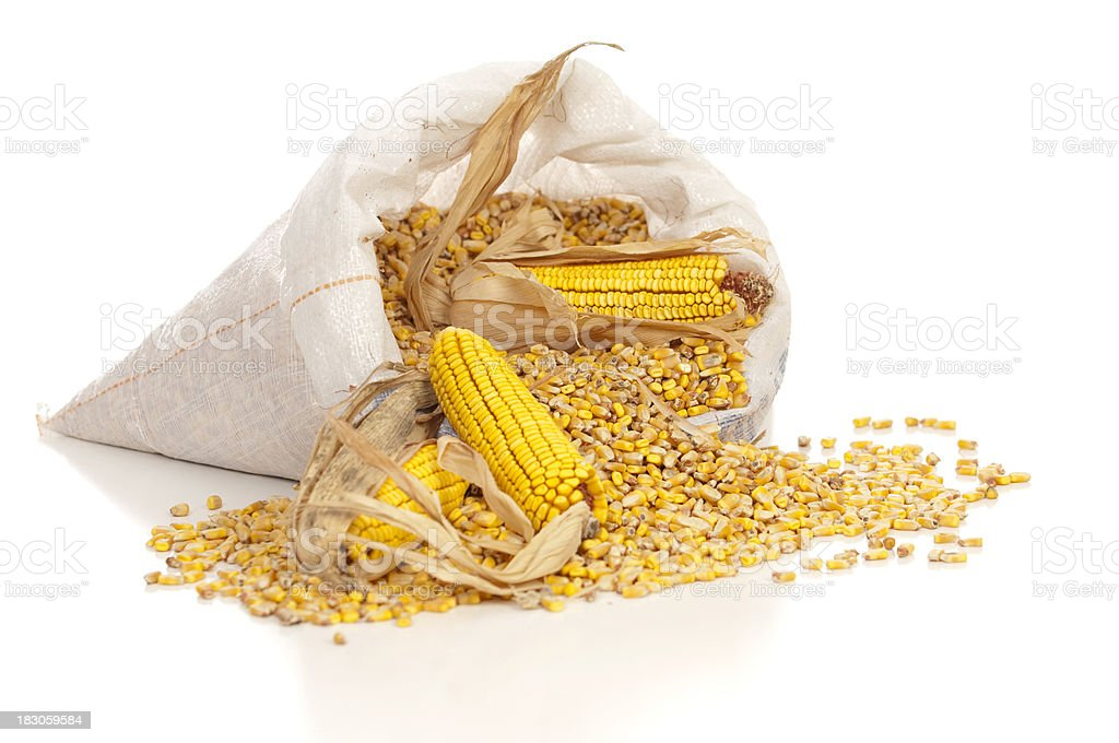 Corn Spills Out of a Sack stock photo