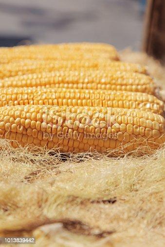 Corn - Street food