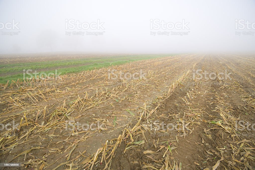 Corn Stubble stock photo