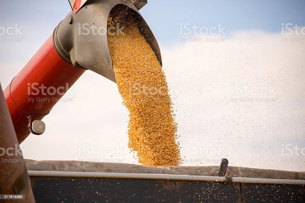 Corn tank stock photo