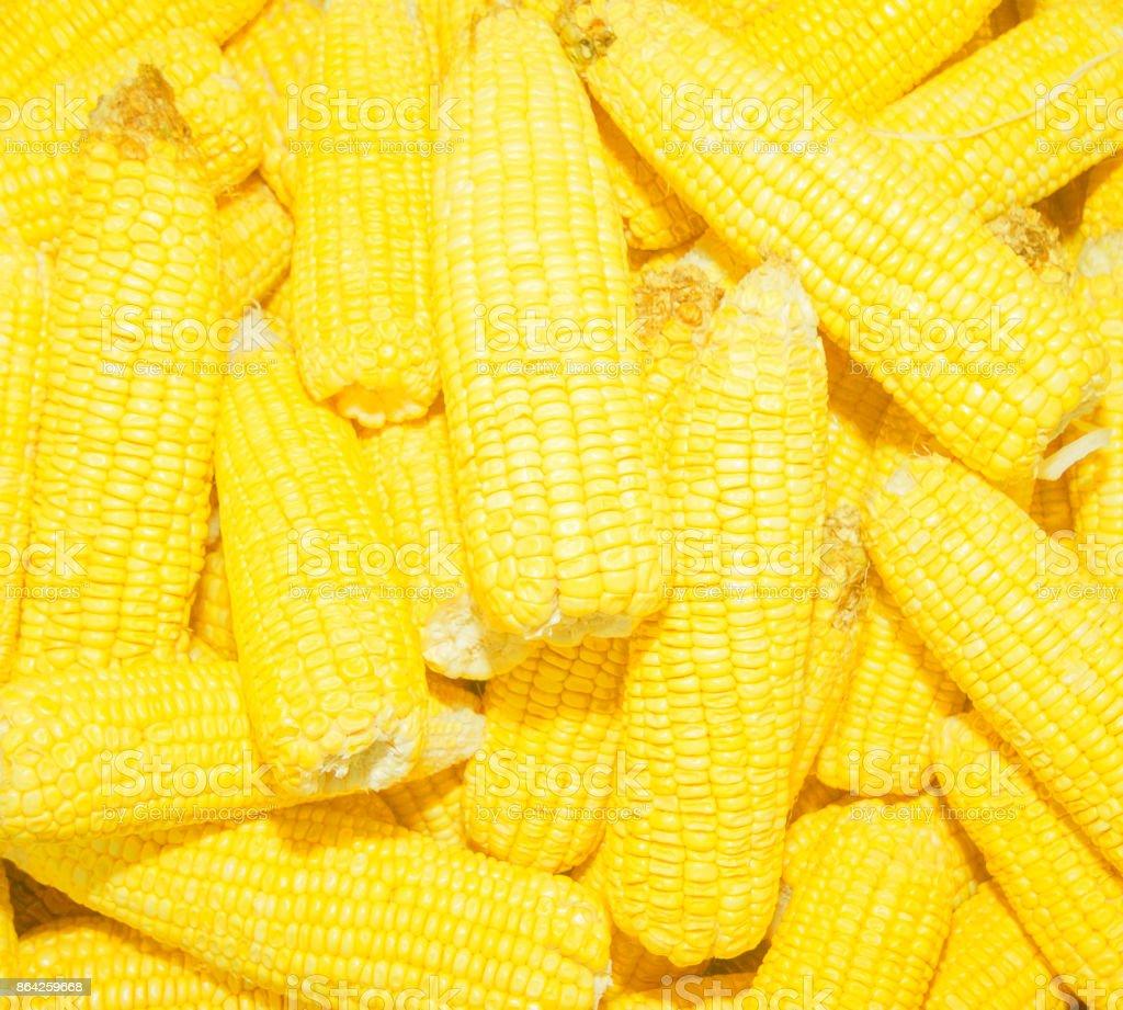 Corn texture  background royalty-free stock photo
