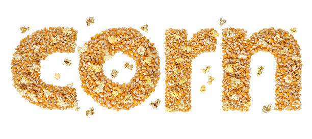 Corn Word made with corn seeds with clipping path. stock photo
