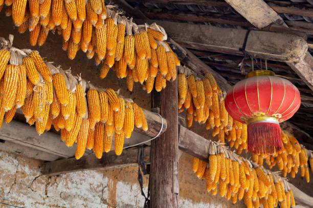 Corncobs and chinese lantern hanged over the entrance of a traditional hmong house in Ha Giang Province, Northern Vietnam. stock photo