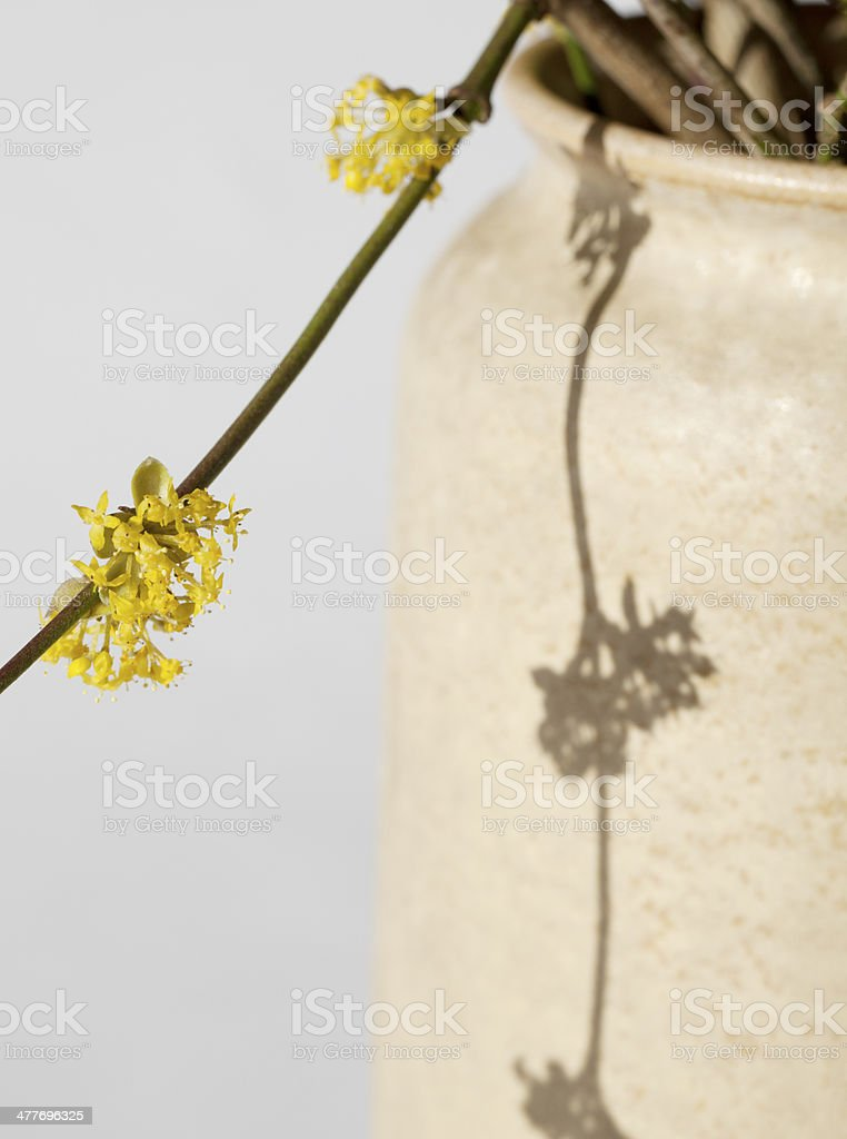 Cornelian Cherry (Cornus mas) royalty-free stock photo