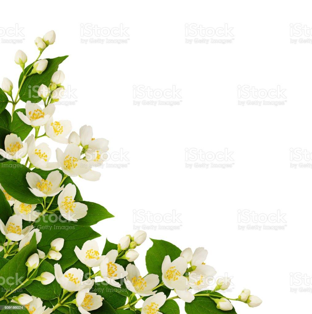Corner arrangement with jasmine flowers and leaves stock photo corner arrangement with jasmine flowers and leaves royalty free stock photo izmirmasajfo