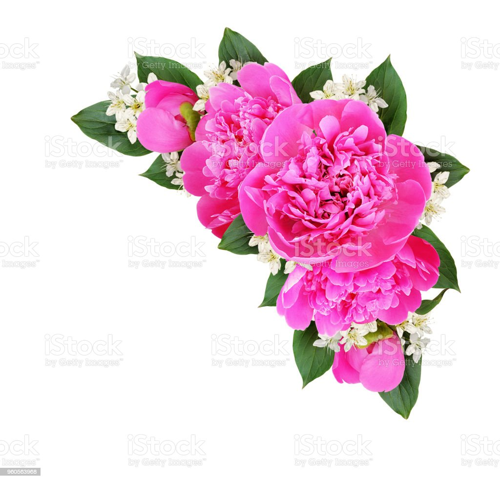 Corner Composition With Pink Peonies And Small White Flowers Stock