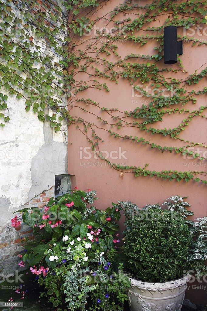 Rosa angolo con la parete foto stock royalty-free