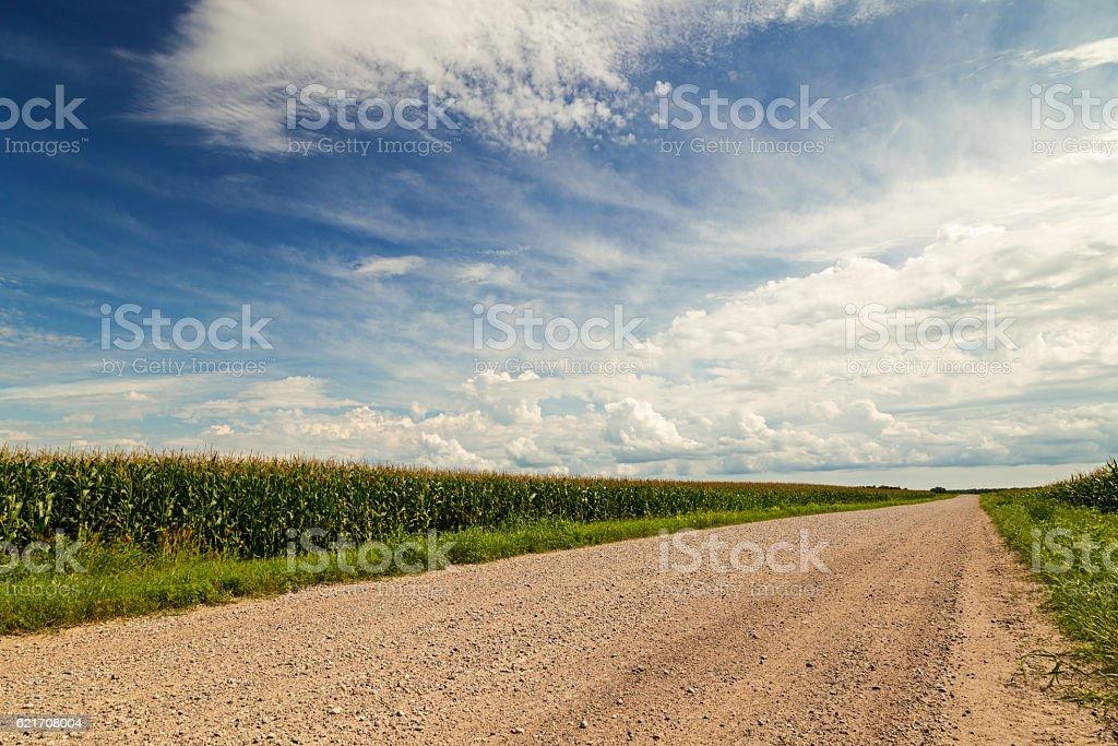 Cornfield Along Country Road stock photo