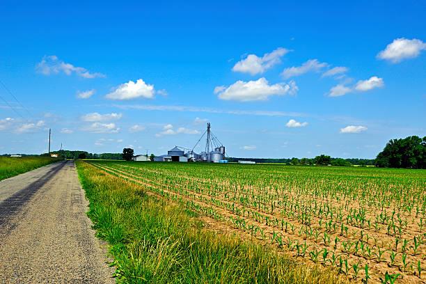 Cornfield and Farm stock photo