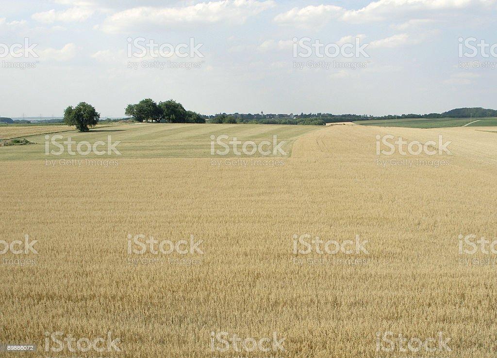 cornfield in Hohenlohe royalty-free stock photo