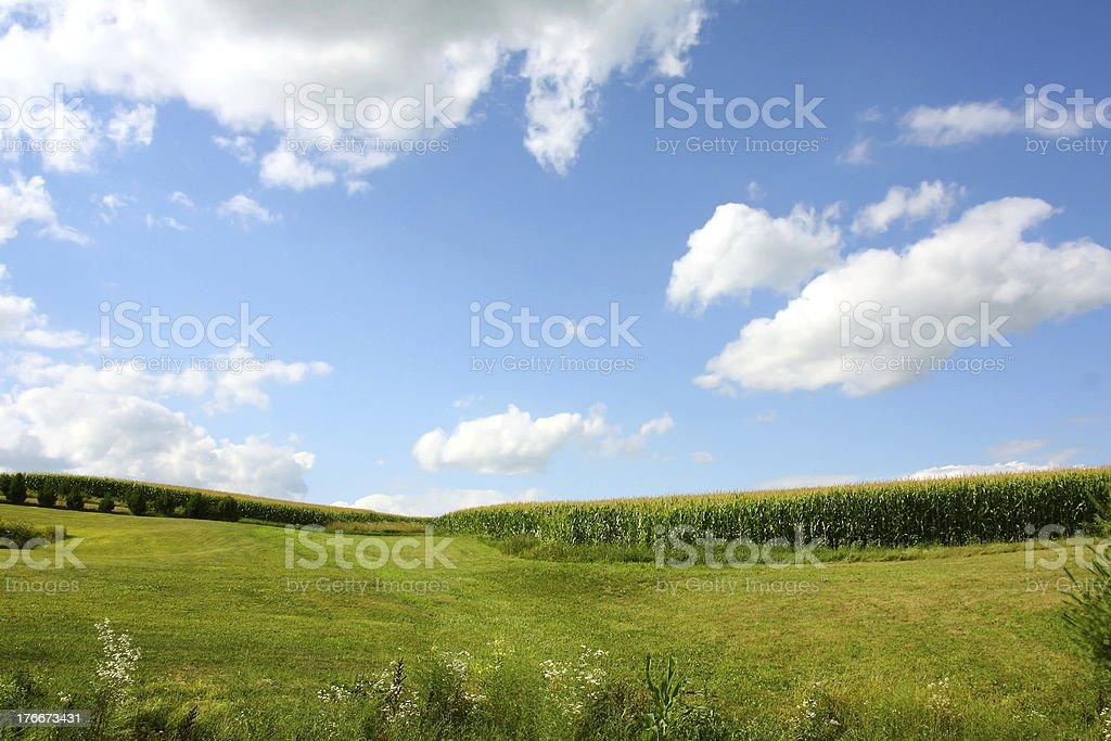 Cornfield Landscape royalty-free stock photo