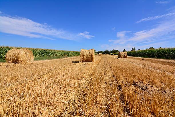 cornfield mowed con straw fardo - caernarfon and merionethshire stockfoto's en -beelden