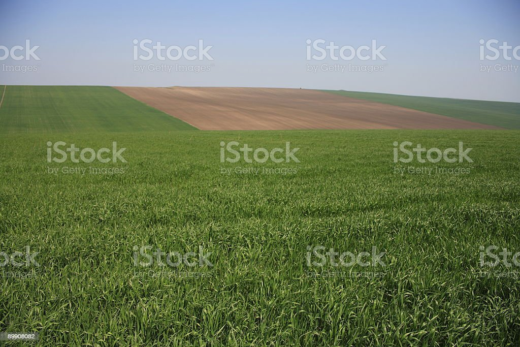 Cornfield on Hill royalty-free stock photo
