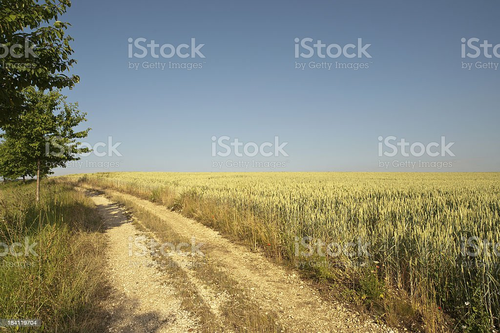 Cornfield with rural road stock photo