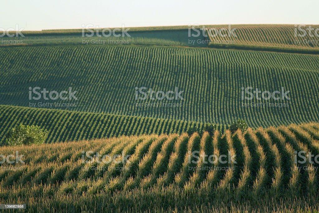 Cornfields, Schuyler, Nebraska stock photo