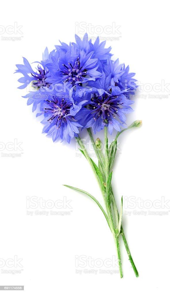 Fleur de Barbeau - Photo
