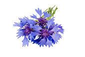 Flowers series