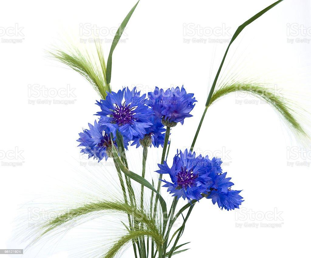 cornflowers e orecchie foto stock royalty-free