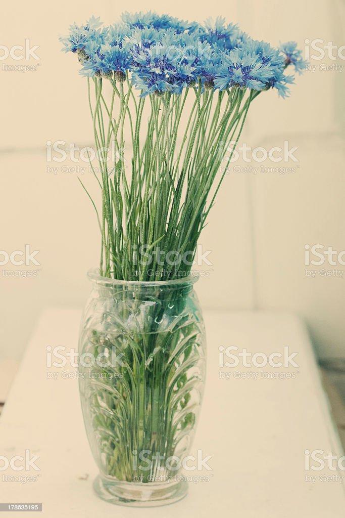 cornflowers en un florero foto de stock libre de derechos
