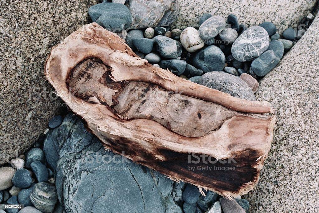 Cornish Driftwood royalty-free stock photo