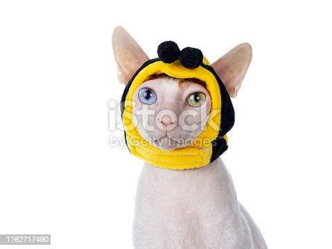 istock Cornish Rex with mask on white 1162717490