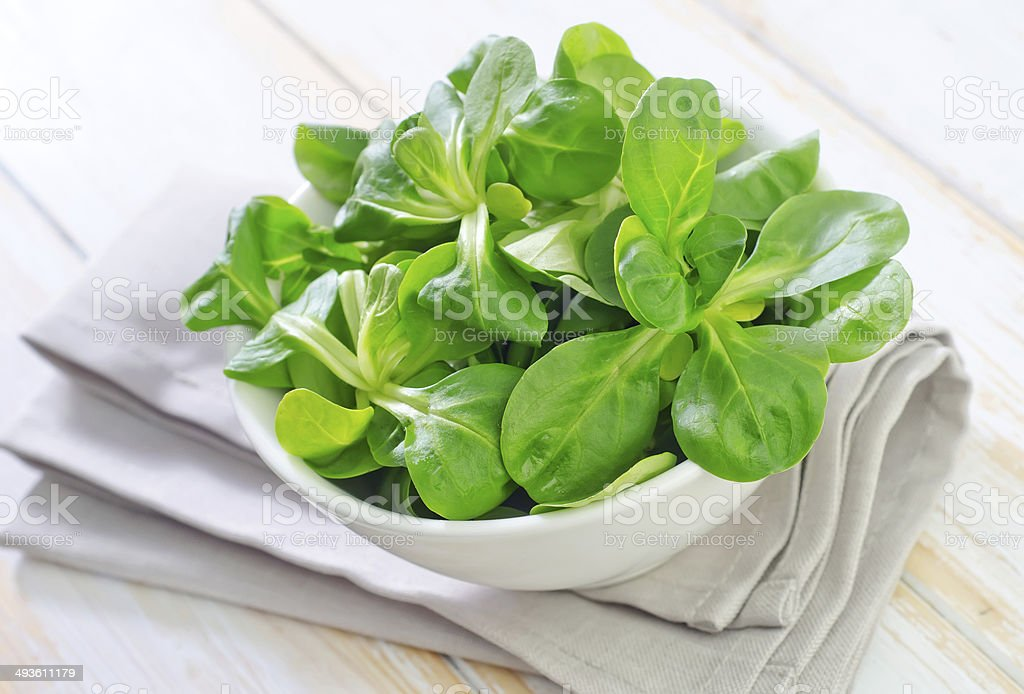 cornsalad stock photo