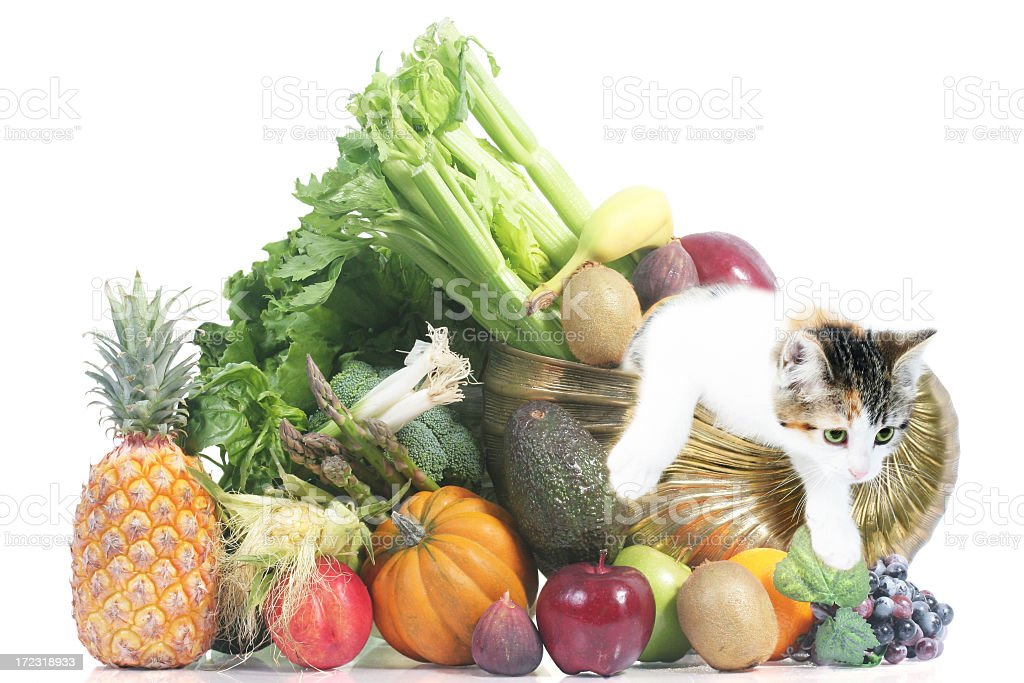Cornucopia fruits vegetables and cat royalty-free stock photo