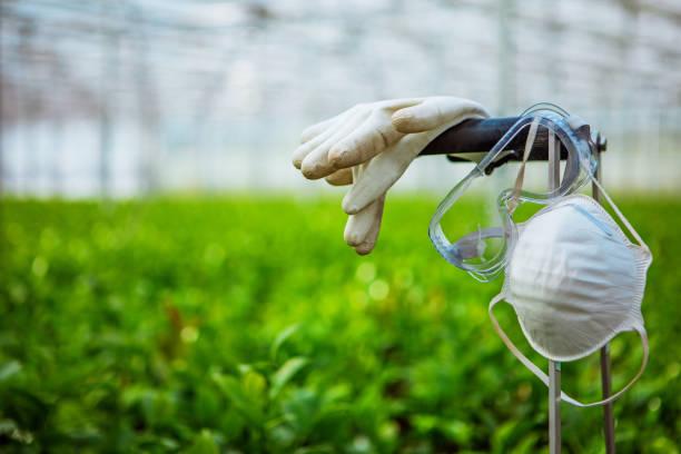 Corona practice equipment in a greenhouse stock photo