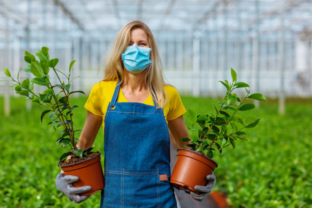 Corona practices for a female greenhouse worker stock photo