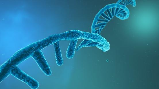 Coronavirus RNA strand