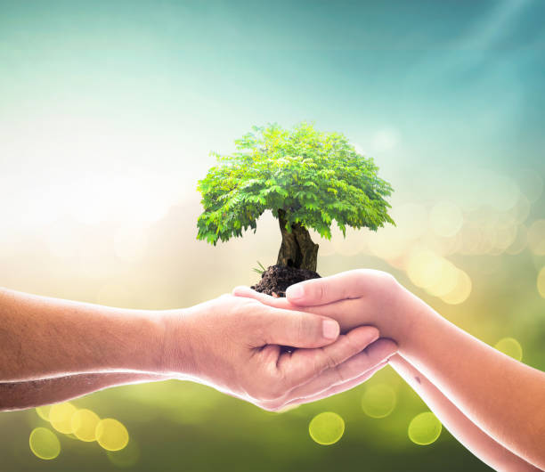 Corporate social responsibility (CSR) concept Two human hands holding big tree over blurred city background. Elements of this image furnished by NASA community center stock pictures, royalty-free photos & images