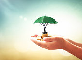 Human hands holding stacks of golden coins and green umbrella of tree on blurred nature background