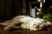 istock Corpse of white cat died on the ground 897492470