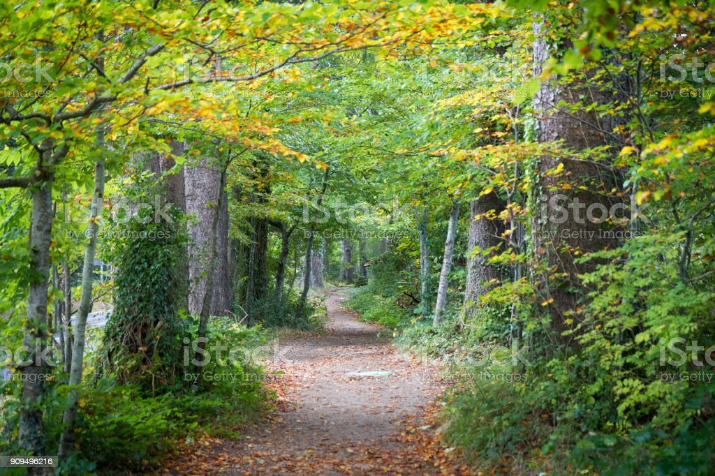 Corridor of leaves stock photo