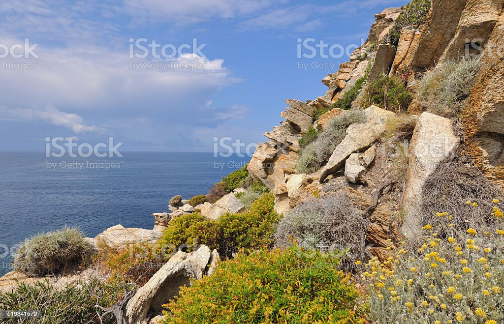 Corsica coastline with flowers stock photo