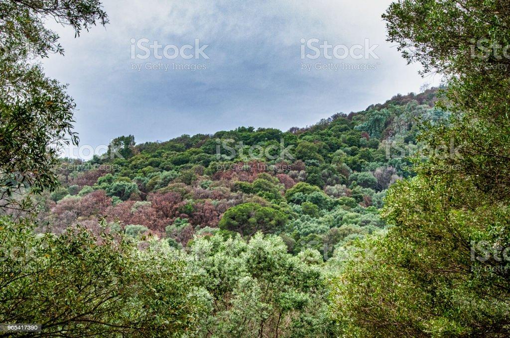 Corse au printemps royalty-free stock photo
