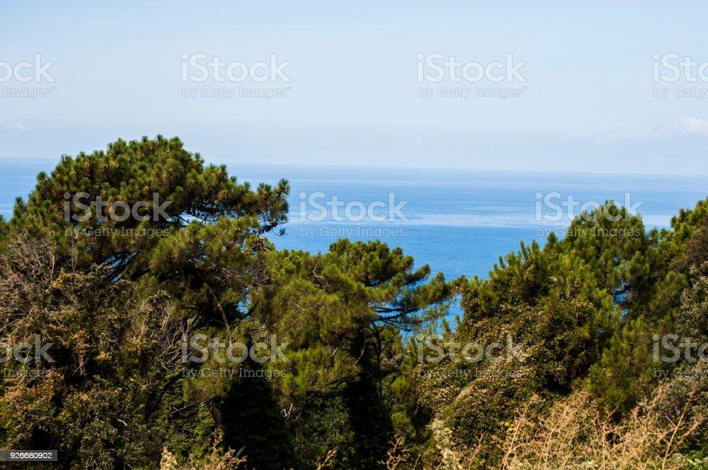 Corsica Trees Mediterranean Maquis And The Mediterranean Sea Symbols