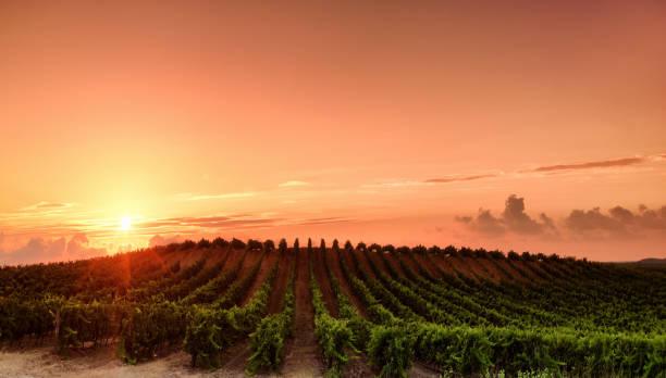 Vignoble de Corse - Photo