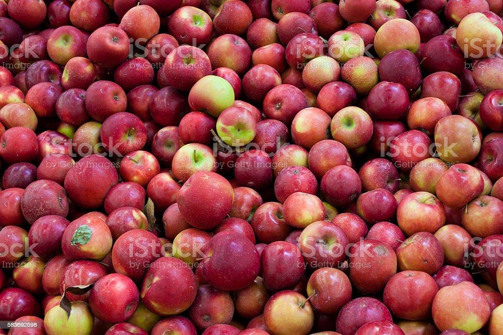 Cortland apple background stock photo