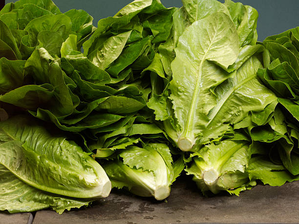 Cos Lettuce A few Cos lettuce ready for the market. romaine lettuce stock pictures, royalty-free photos & images