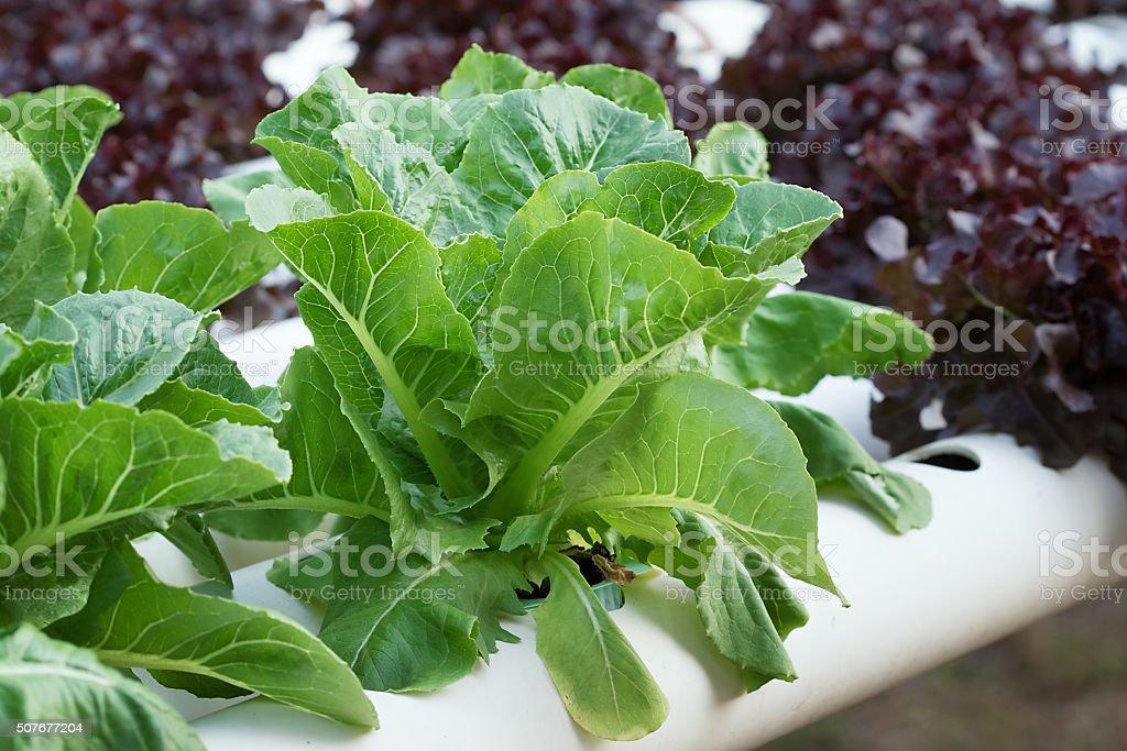 COS Salade de légumes - Photo