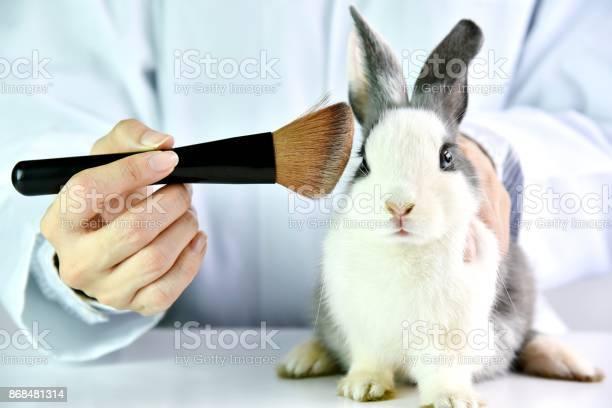 Cosmetics test on rabbit animal scientist or pharmacist do research picture id868481314?b=1&k=6&m=868481314&s=612x612&h=kzxr 3dbtygsqzcl3tcmhu6tvtfrcz1nuep98xcgp5s=