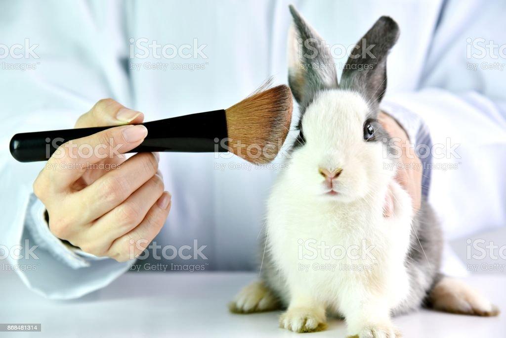 Kosmetik-Test am Kaninchen Tier, Wissenschaftler oder Apotheker forschen chemische Inhaltsstoffe Test auf Tier im Labor, Cruelty free und Stop-Tierquälerei-Konzept. – Foto