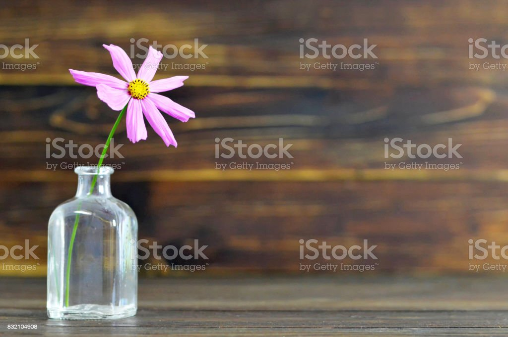 Cosmos flower on wooden background stock photo