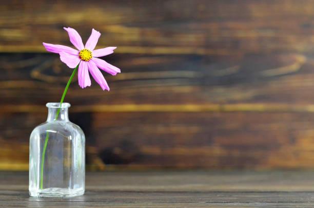 Fleur de Cosmos sur fond en bois - Photo