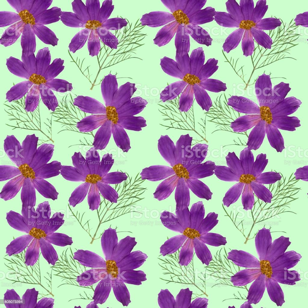 Cosmos. Seamless pattern texture of flowers. Floral background, photo collage stock photo