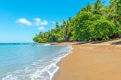 Tropical beach along the Pacific Ocean on a warm summer day with palm trees and tranquil waves inside Corcovado National Park, Osa Peninsula, Costa Rica, Central America.