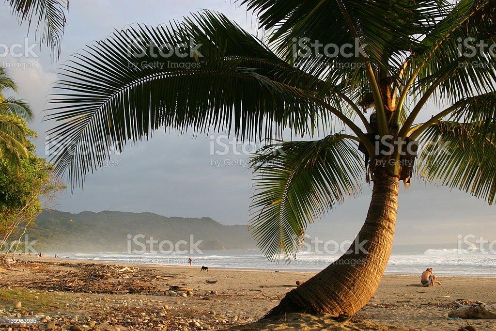 Costa Rica Palm royalty-free stock photo