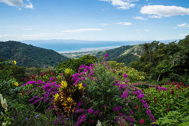 Costa Rica Puntarenas forest view stock photo