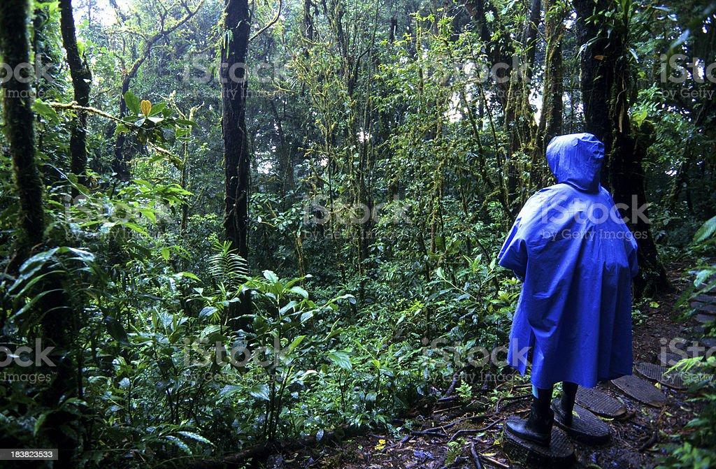 Costa Rica, Puntarenas Province, Monteverde, cloud forest. stock photo